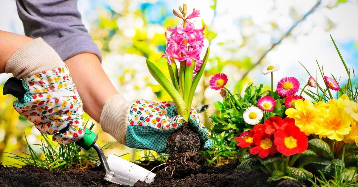 Arredare con le piante piante da interno e da appartamento - Arredare con le piante da interno ...